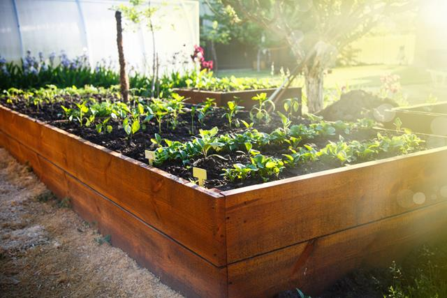 container vegetable garden. Container-vegetable-gardening Container Vegetable Garden A