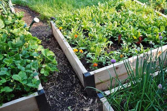 container-vegetable-gardening