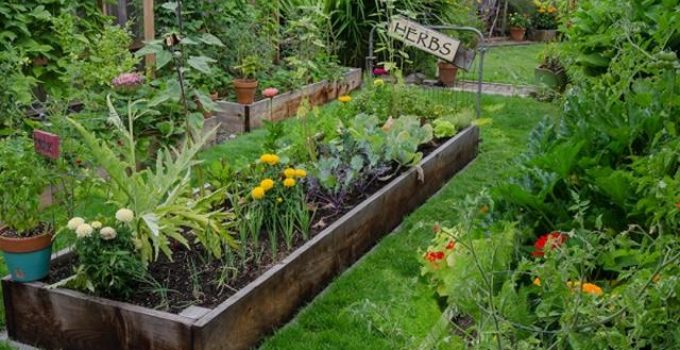 raised-bed-vegetable-gardening