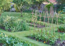 vegetable-gardening
