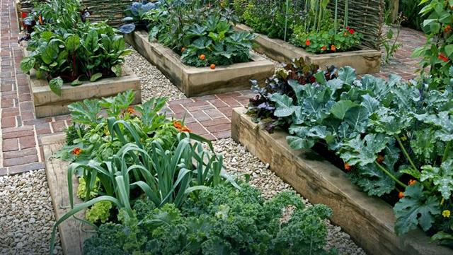 vegetable-gardening-for-beginners