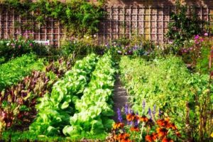 vegetable-gardening-for-beginners