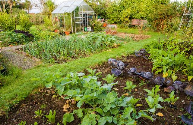 vegetable-gardening-tips
