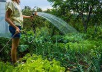vegetable-gardening-tips