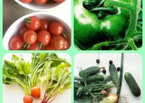 Achieve Horticulture Success With These Useful Tips