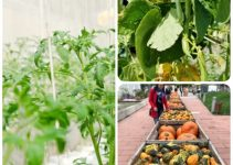 Advice That Can Help You Get Better At Organic Vegetable Gardening