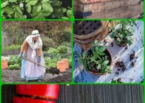 Do Not Look Any Further For Organic Vegetable Gardening Advice