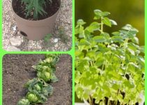 Finally You Can Make Your Garden Grow Better Than Ever