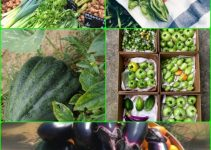 Great Guide When It Comes To Organic Vegetable Gardening