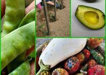 Horticulture Tips For The Most Bountiful Harvest