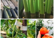 How To Be Successful With Organic Horticulture