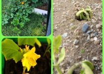 How To Grow A Garden In Window Boxes