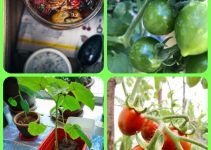How To Successfully Grow A Healthy Organic Garden