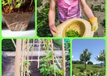 Interested In Organic Vegetable Gardening? Read These Tips!