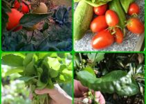 Learning How To Improve The Conditions Of Your Garden