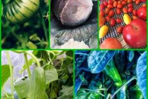 Learning Tips To Help With Your Organic Horticulture