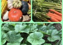 Make Your Vegetable Gardening Dreams Come True With This Advice