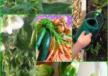 Organic Garden Tips And Tricks For New Growers