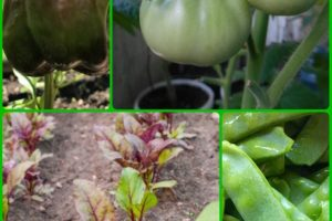 Organic Horticulture Advice That Everyone Should Know