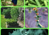 Organic Vegetable Gardening And You – Let's Get Started!