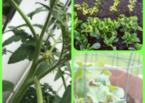 Organic Vegetable Gardening Made Simple Through These Tips