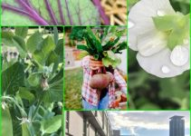 Organic Vegetable Gardening Tips For Every Season Of The Year