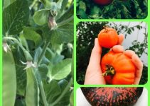 Proven Tips For The Perfect Organic Garden