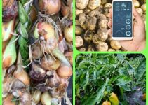 The Ins And Outs Of The Art Of Vegetable Gardening