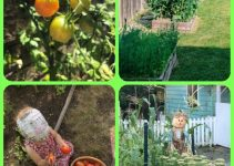 Things You Must Know When It Comes To Organic Horticulture