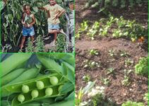 Tips From Experts On A Healthy Garden