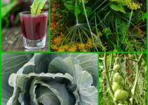 Tips That All Organic Gardeners Should Know