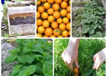 Tips That Will Get You Enthusiastic For Vegetable Gardening