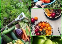 Use These Tips For A Successful Garden