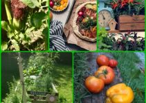 Use This Piece As Your Personal Vegetable Gardening Guide