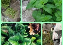 Useful Advice For Organic Horticulture