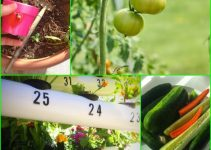 Useful Ideas To Help Your Garden Grow