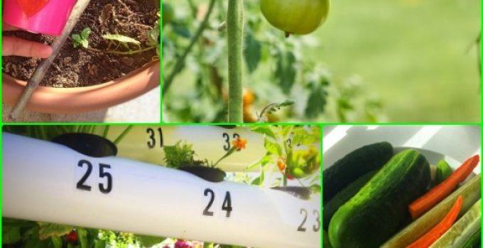 Useful Ideas To Help Your Garden Grow