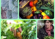 Vegetable Gardening Is Easy With These Great Ideas