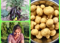 Your Organic Garden: Great Advice You Can Use Today