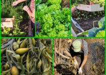 All You Need To Know About Organic Horticulture