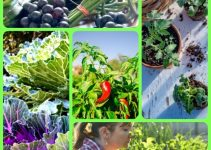 Build A Beautiful Organic Vegetable Garden With These Tips
