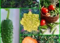 City Dweller? You Can Still Grow A Vegetable Garden!