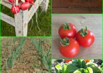 Creating  A Vegetable Garden The Whole Family Can Enjoy