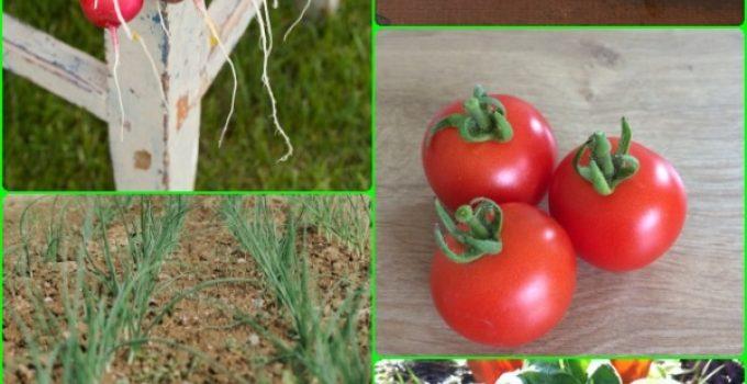 Creating  A Vegetable Garden The Whole Family Can Enjoy