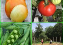 Does Your Vegetable Garden Need A Little Help? Find Handy Tips Here!
