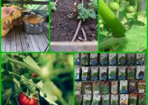 Essential DIY Vegetable Gardening Tips For The Struggling Gardener