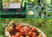 Get A Better Vegetable Garden With These Sensible Horticulture Tips!