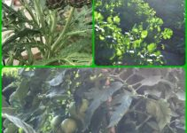 Get Growing! Organic Vegetable Gardening Tips And Tricks