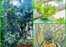 Getting The Most Green From Your Vegetable Garden