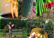 Great Organic Vegetable Gardening Advice You Should Follow